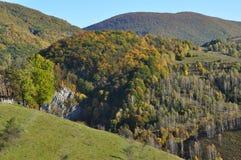 Fogliame di caduta di autunno Immagine Stock