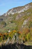 Fogliame di caduta di autunno Immagini Stock