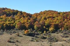 Fogliame di caduta di autunno Immagini Stock Libere da Diritti