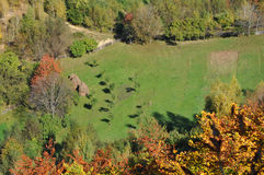 Fogliame di caduta di autunno Fotografia Stock Libera da Diritti