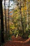 Fogliame di caduta di autunno Fotografia Stock