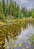 Fogliame di caduta e neve di settembre nel parco nazionale di Yellowstone Immagine Stock Libera da Diritti