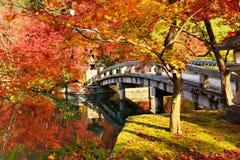 Fogliame di caduta a Kyoto Immagini Stock