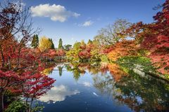 Fogliame di caduta a Kyoto, Giappone Immagini Stock