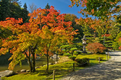 Fogliame di caduta lungo il percorso giapponese del giardino Fotografia Stock