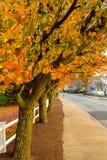 Fogliame di caduta in Massachusetts suburbano immagine stock libera da diritti