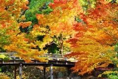 Fogliame di caduta a Nagoya, Giappone Fotografia Stock Libera da Diritti
