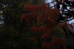 Fogliame di caduta nella nebbia fotografia stock libera da diritti
