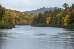 Fogliame di caduta sul fiume di Androscoggin vicino a Errol, New Hampshire immagine stock libera da diritti