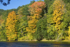 Fogliame di caduta sul fiume di Westfield, Massachusetts Fotografia Stock