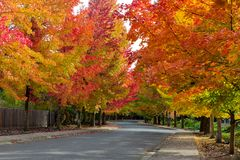 Fogliame di caduta sulla via suburbana della vicinanza di U.S.A. allineata albero fotografia stock
