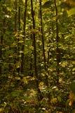 Fogliame di caduta variopinto della foresta Fotografia Stock Libera da Diritti