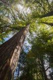 Fogliame di caduta in Yosemite Immagine Stock Libera da Diritti