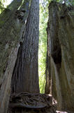 Fogliame di caduta in Yosemite Fotografie Stock