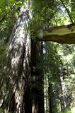 Fogliame di caduta in Yosemite Immagini Stock Libere da Diritti