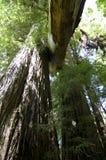 Fogliame di caduta in Yosemite Fotografia Stock