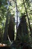 Fogliame di caduta in Yosemite Fotografie Stock Libere da Diritti