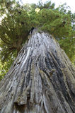 Fogliame di caduta in Yosemite Immagini Stock