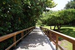 Fogliame di legno di verde del percorso Immagini Stock