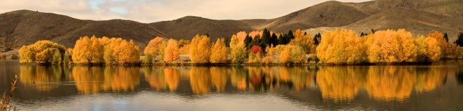 Fogliame dorato intenso lungo una riva del lago vicino a Twizel, isola del sud, Nuova Zelanda fotografie stock