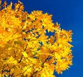 Fogliame e cielo di autunno Fotografie Stock Libere da Diritti