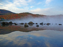 Fogliame e nebbia della montagna Fotografia Stock
