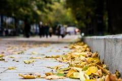 Fogliame giallo di autunno al bordo di pietra di una via immagini stock