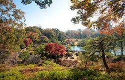 Fogliame giapponese di autunno del parco fotografie stock