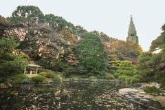 Fogliame giapponese di autunno del parco fotografia stock libera da diritti