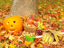 Fogliame, guanti di giardinaggio, rastrelli, frutta e torcia Fotografie Stock