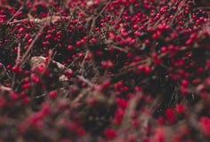 Fogliame pacifico di inverno di nanowatt Fotografie Stock