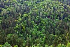 Fogliame Slovenia della foresta fotografia stock libera da diritti