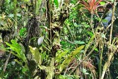 fogliame tropicale Fotografia Stock