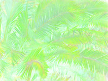 Fogliame tropicale astratto Immagini Stock Libere da Diritti