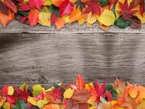 Fogliame variopinto con priorità bassa di legno Fotografia Stock