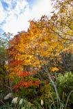 Fogliame variopinto degli alberi in autunno fotografia stock libera da diritti