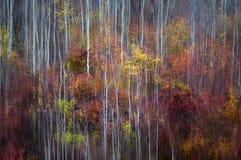 Fogliame variopinto di autunno con una sensibilità painterly fotografie stock
