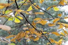 Fogliame variopinto nei precedenti del cielo delle foglie di autunno del parco di autunno fotografie stock