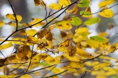 Fogliame variopinto nei precedenti del cielo delle foglie di autunno del parco di autunno fotografia stock libera da diritti
