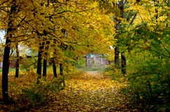 Fogliame variopinto nella sosta di autunno Fotografia Stock Libera da Diritti