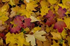 Fogliame variopinto nella sosta di autunno Fotografia Stock