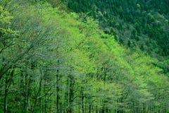 Fogliame verde New Hampshire della primavera Fotografia Stock Libera da Diritti