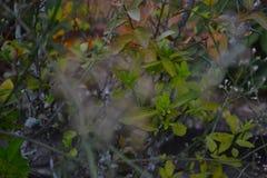 Foglie Fotografie Stock