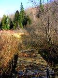 Foglie abbandonate di autunno e del bacino Fotografie Stock