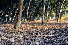 Foglie & alberi in autunno Immagine Stock