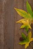Foglie in anticipo di caduta su legno rustico Immagini Stock Libere da Diritti