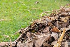 Foglie asciutte degli alberi che si trovano sulla terra fotografia stock libera da diritti