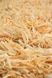 Foglie asciutte del cereale Fotografia Stock