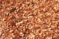 Foglie asciutte della quercia sulla terra Fondo naturale di autunno fotografie stock