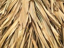 Foglie asciutte di alpinia galanga Fotografie Stock
